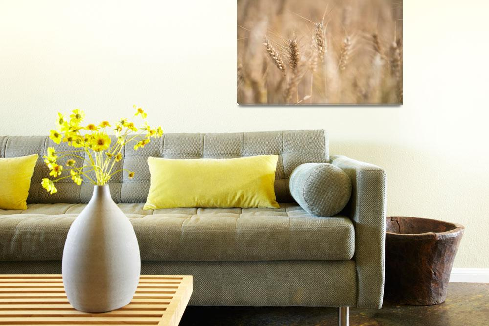"""Head Of Corn In A Summer Harvest Field""  by SHOPPINGUSA"