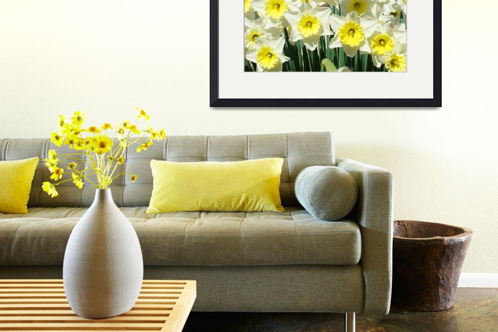 """""""Garden Daffodils Floral art prints Spring Flowers""""  (2010) by BasleeTroutman"""