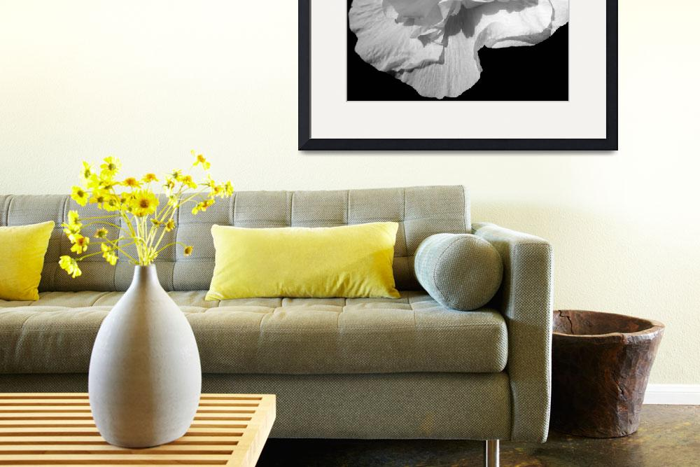 """""""White Flower 1 - Elegance&quot  (2011) by atalinamarie"""