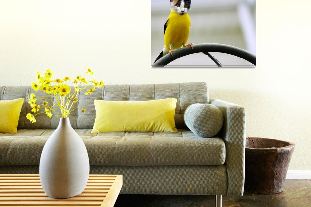 """cat bird (Photoshop Play)""  by bill_kerr"