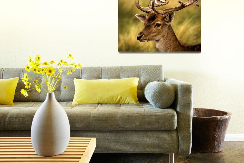 """Dama deer""  (2013) by hdcaputo"