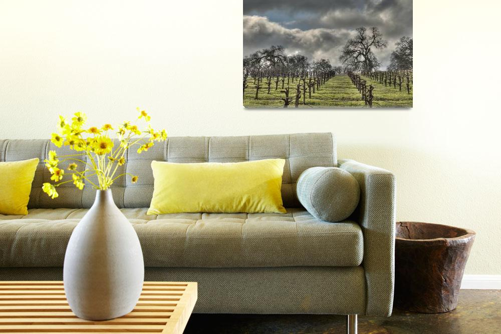 """""""Spring Storm, Amador County Vineyards""""  (2009) by SederquistPhotography"""