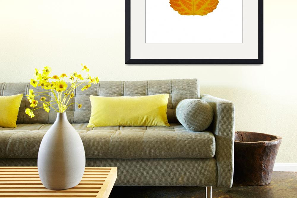 """""""Orange and Yellow Aspen Leaf 2&quot  (2014) by AgustinGobaFineArts"""