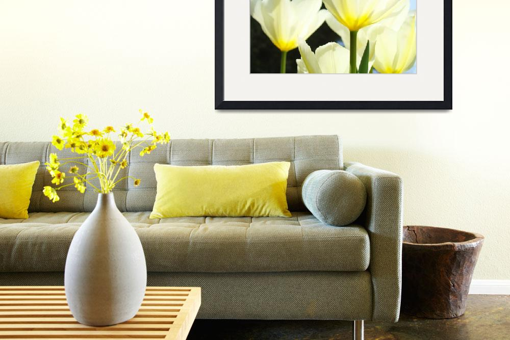 """""""Tulips White Sunlit Glowing&quot  (2011) by BasleeTroutman"""