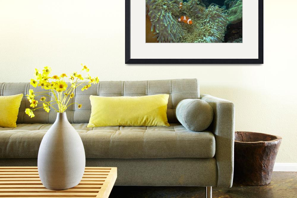 """""""Nemo at home""""  by Mac"""