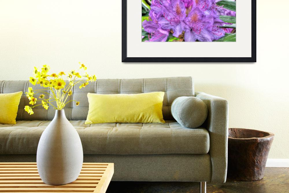 """""""Rhododendron&quot  (2011) by Gjesdal"""