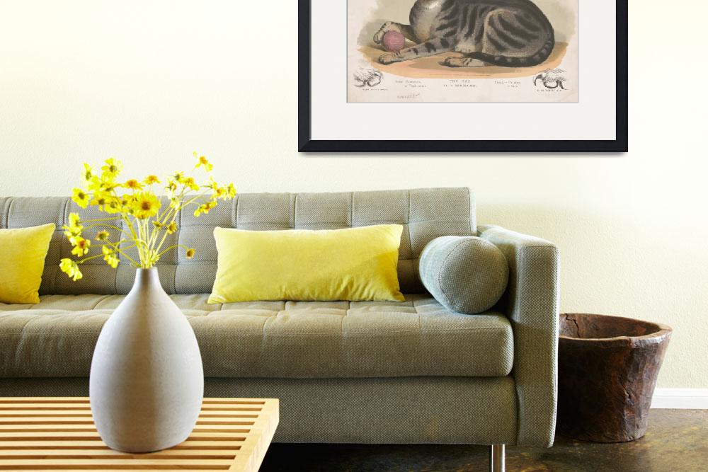 """""""Vintage Illustration of a Domestic Cat (1872)&quot  by Alleycatshirts"""