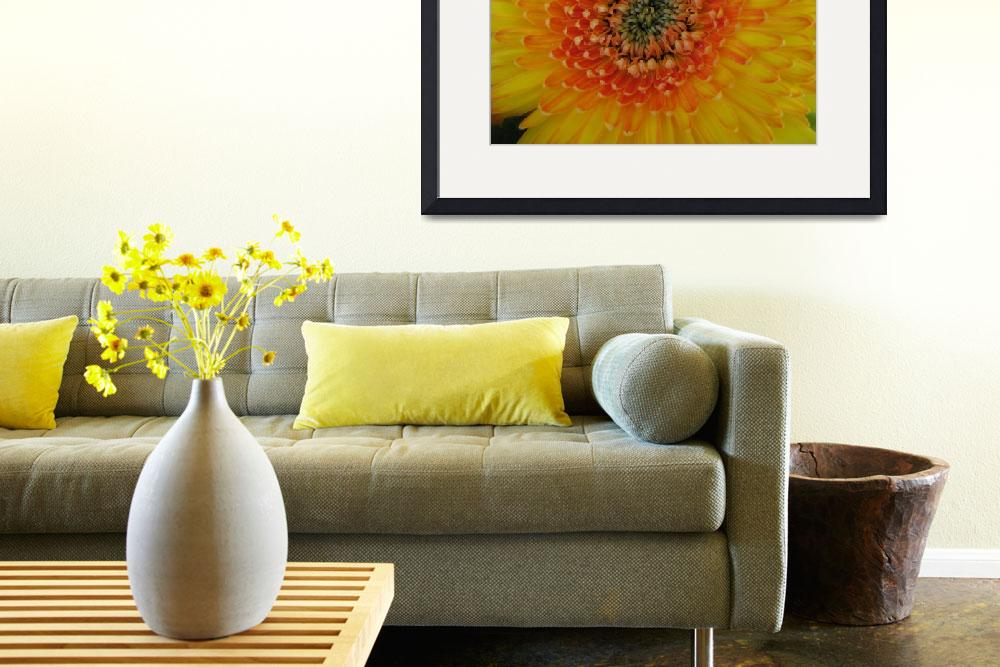 """""""Yellow Gerbera Daisy&quot  (2008) by ardentgarden"""