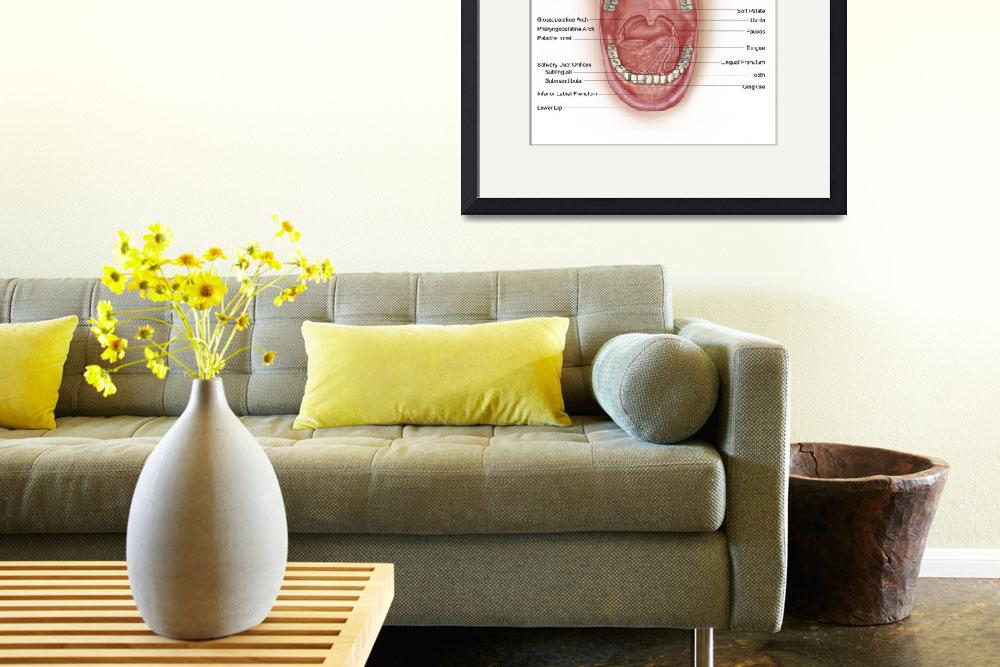 """""""Anatomy of human mouth cavity""""  by stocktrekimages"""