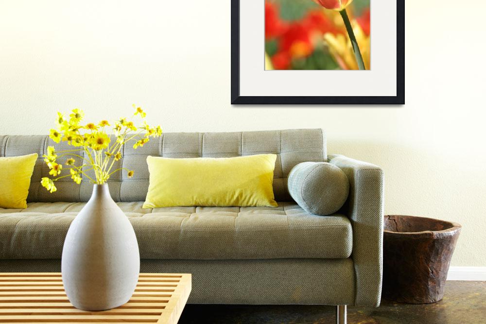 """""""Glowing Yellow Tulip&quot  (2010) by SharpArt"""