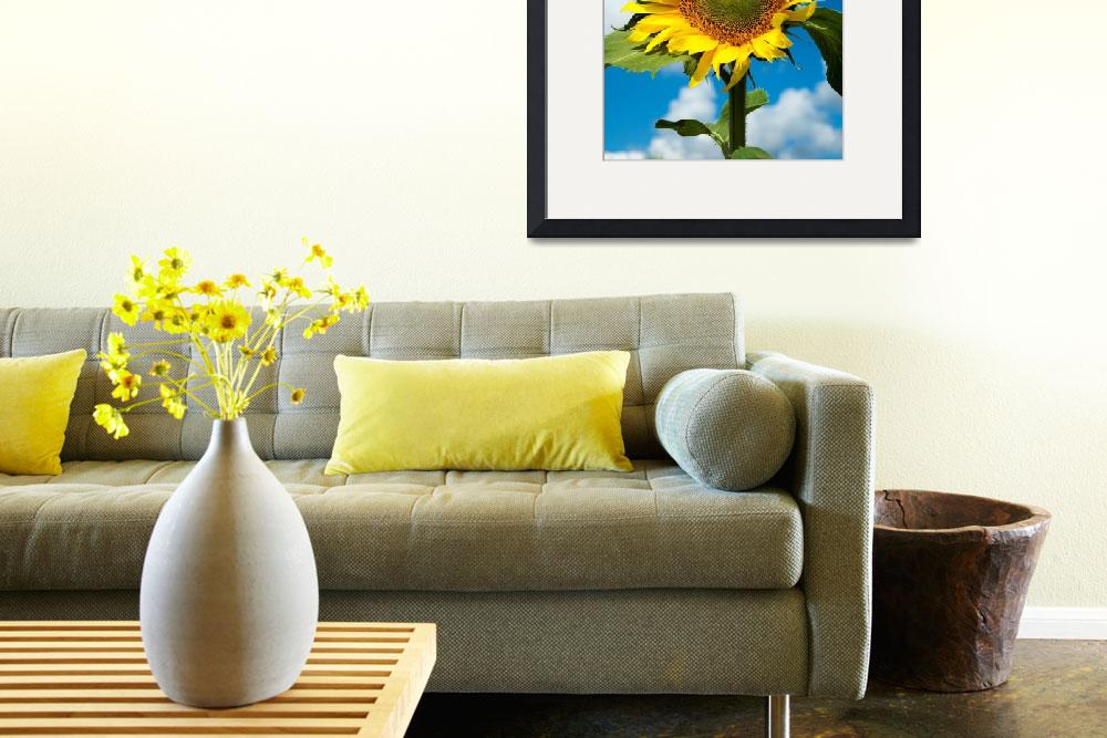 """""""Sunflower against a blue sky&quot  by canbalci"""