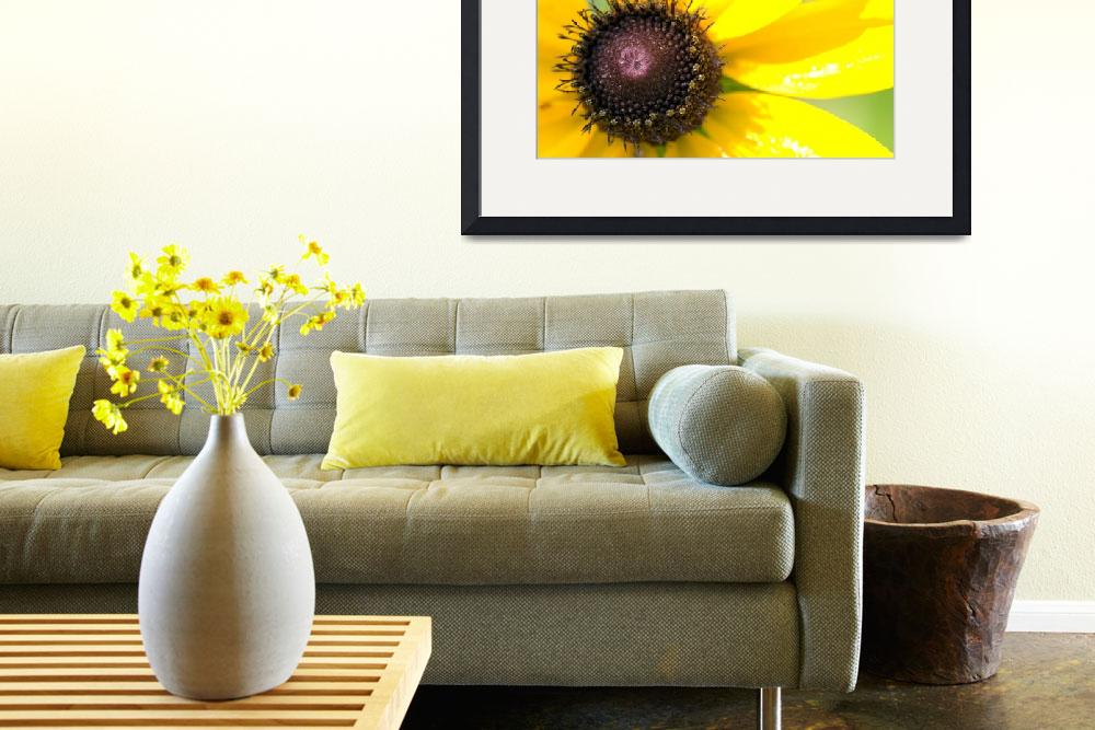 """""""Black Eyed Susan&quot  (2008) by liquidtree"""