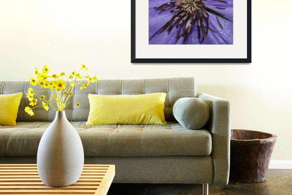 """""""Purple Clematis""""  by dreamwhisper"""