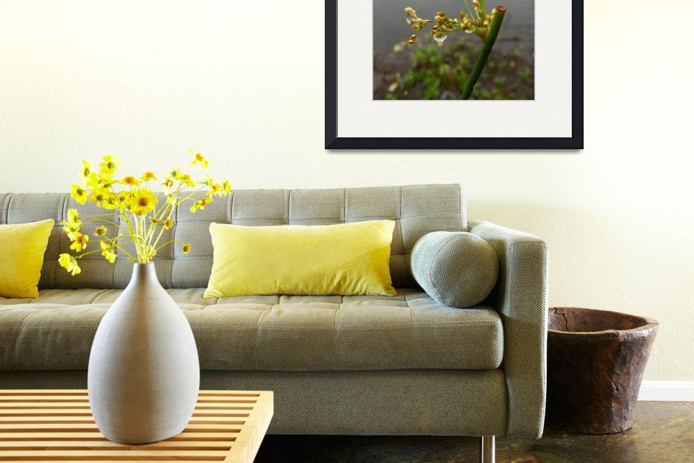 """Weeds after the Rain""  (2012) by privera"