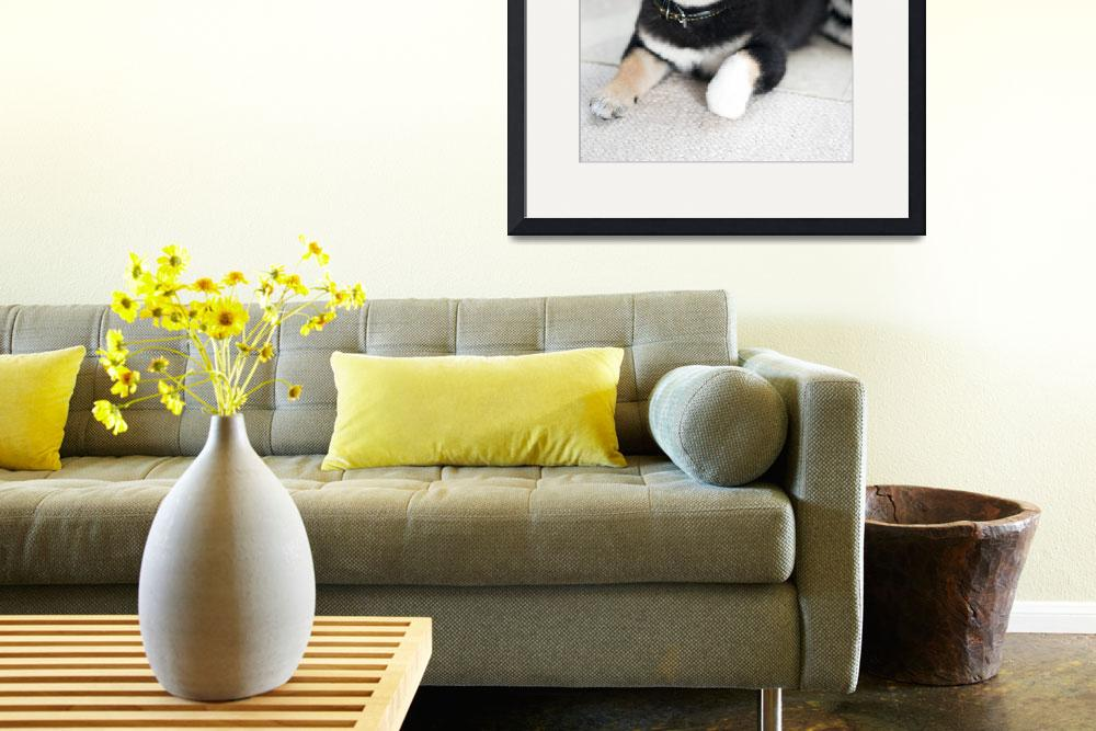 """""""Shiba Inu Puppy&quot  (2010) by ImageArt-Photography"""