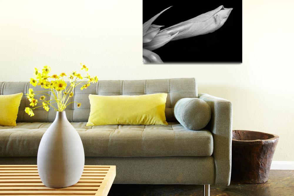"""Amaryllis Flower Bloom in Black and White 2""  (2011) by lightningman"