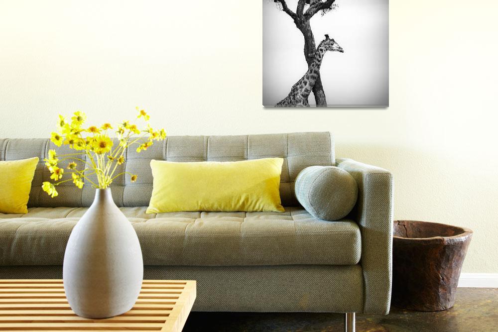 """giraffe and a tree, masai mara, kenya""  (2008) by kalishko"