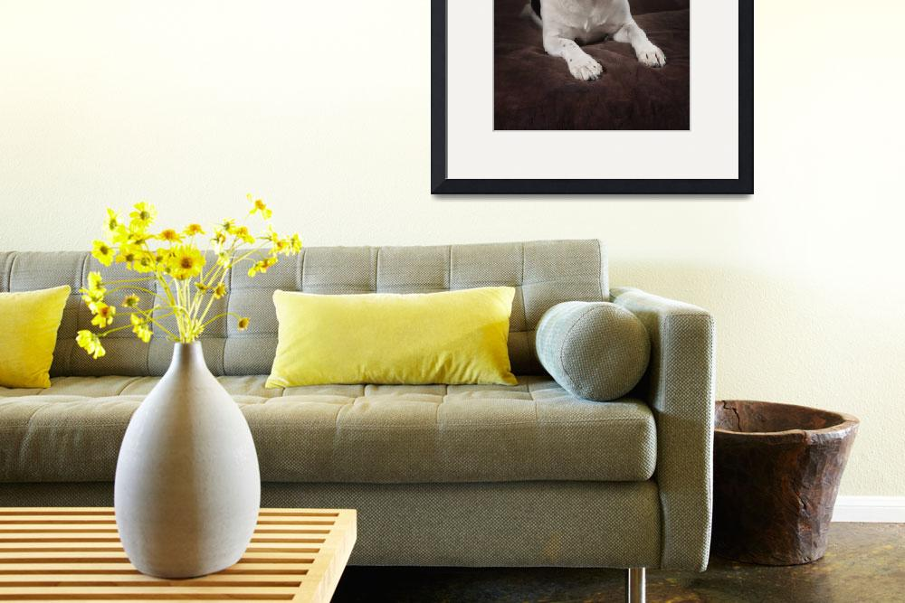 """""""Jack Russell Terrier On A Brown Studio Background""""  by DesignPics"""