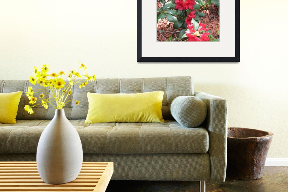 """""""Rhododendron in Bloom&quot  (2011) by outdoorsintheeast"""