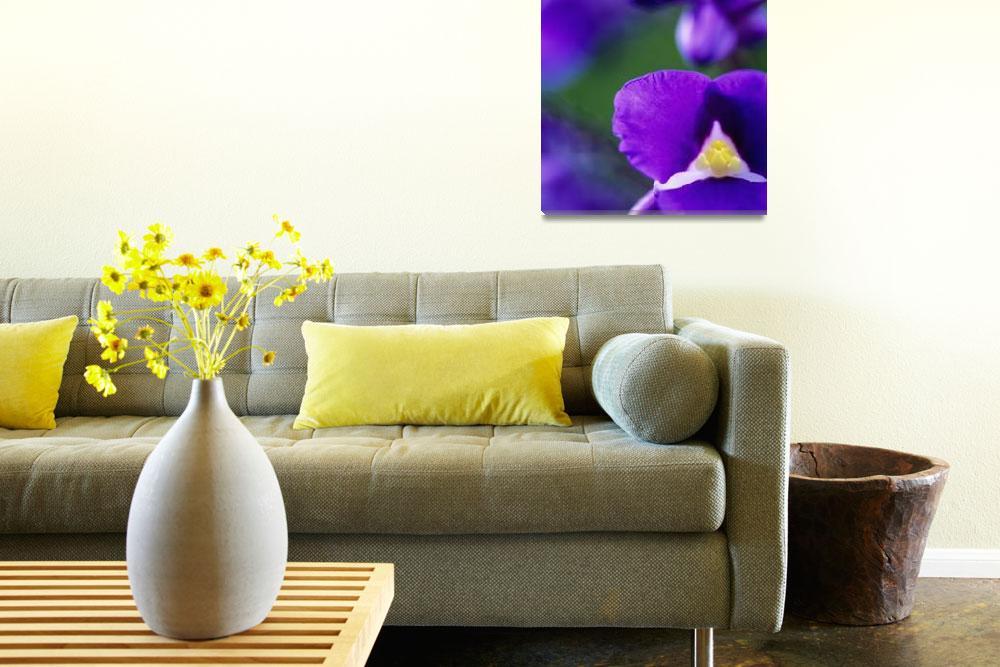 """Blue Ginger, Close-Up Of Blossom""  by DesignPics"