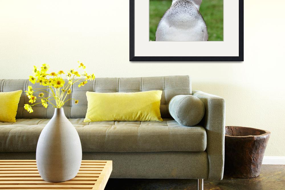 """""""Fed up Penguin""""  (2011) by PliesPhotography"""