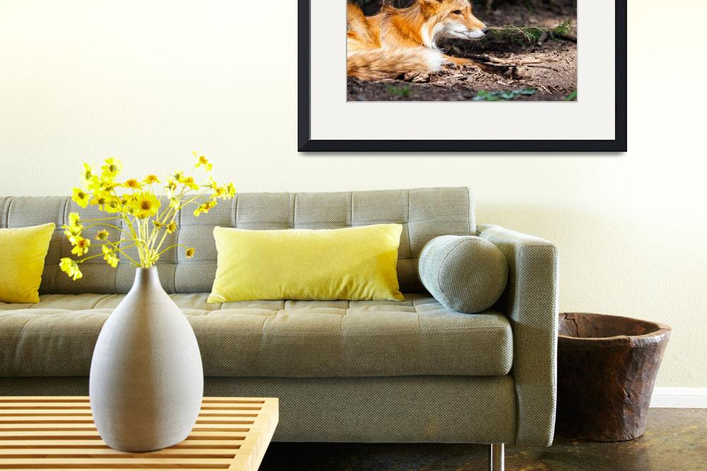 """""""Red Fox Wildlife Wall Print&quot  (2017) by rogueart"""