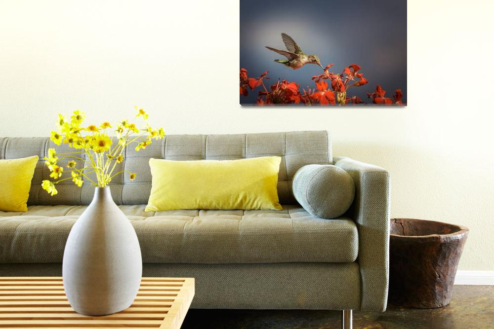 """""""Hummingbird or My Summer Visitor&quot  (2013) by JolaMartysz-Photography"""