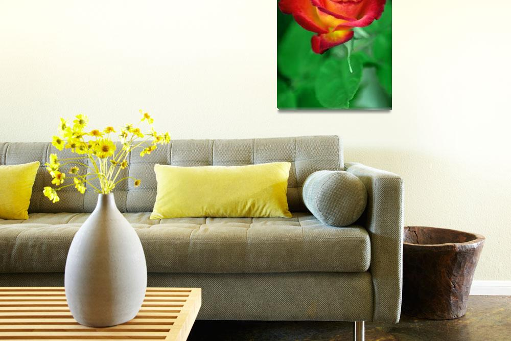 """Sunset Rose""  (2008) by paulhood"