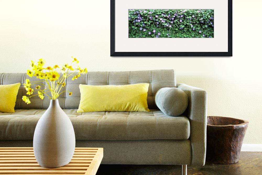 """""""Ipomoea&quot  by Panoramic_Images"""