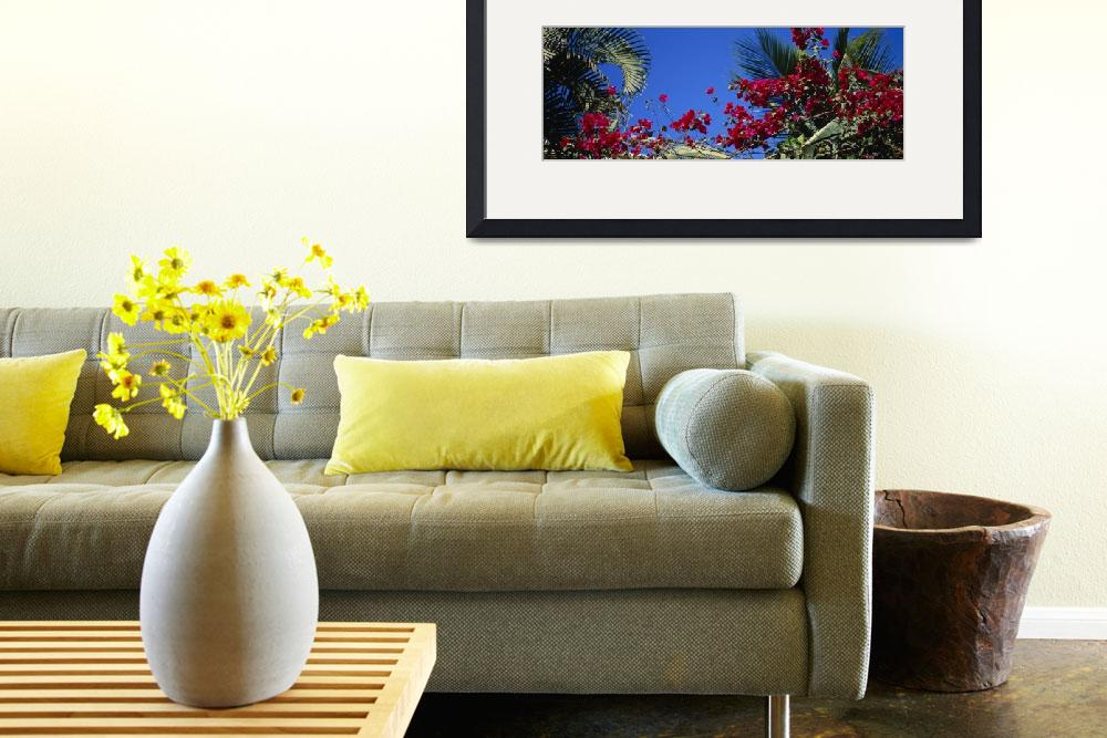 """Flowers Mexico&quot  by Panoramic_Images"