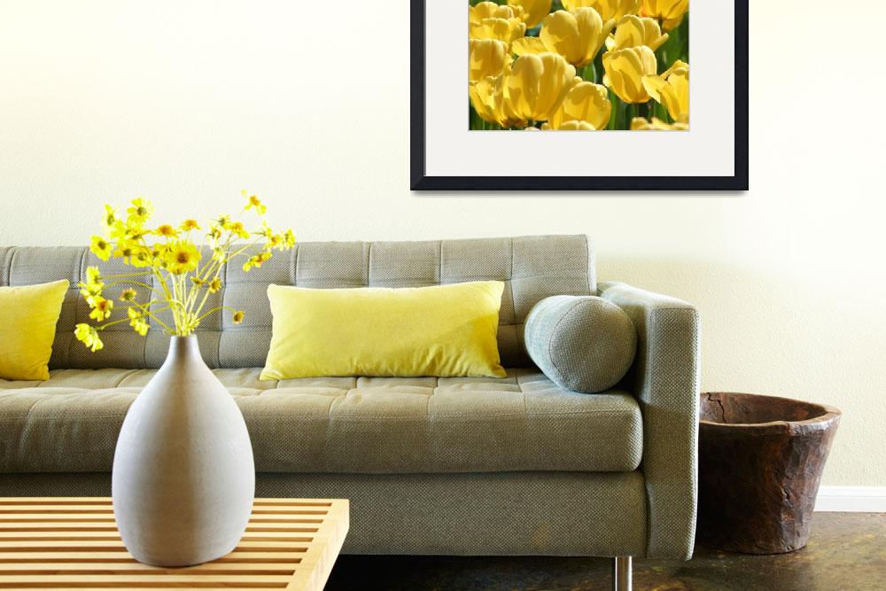 """""""Yellow Tulips&quot  (2006) by abqactor"""