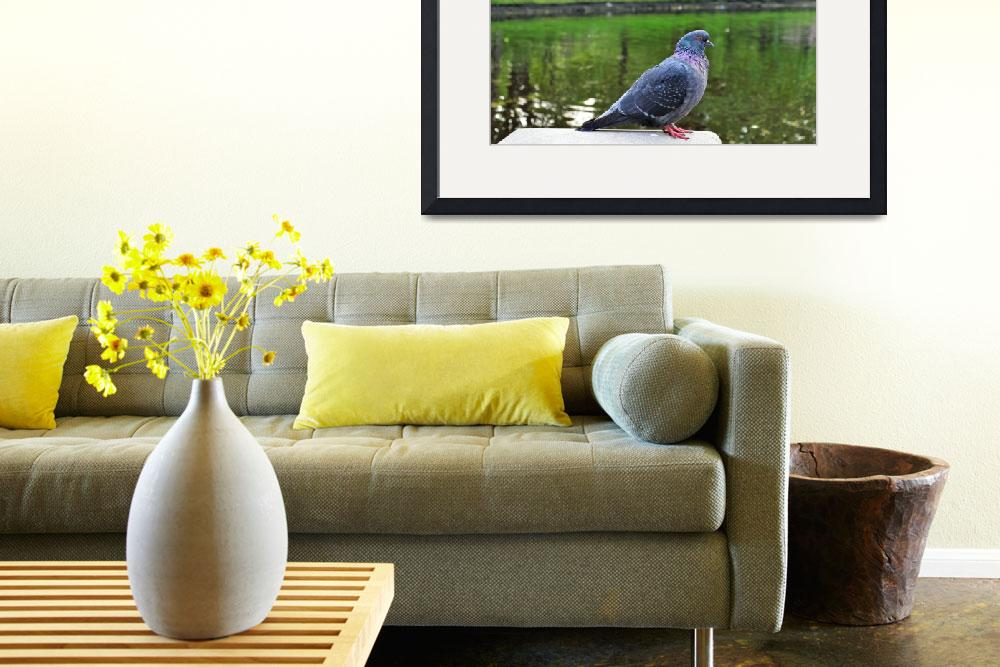 """""""Pigeon&quot  (2013) by Viator"""