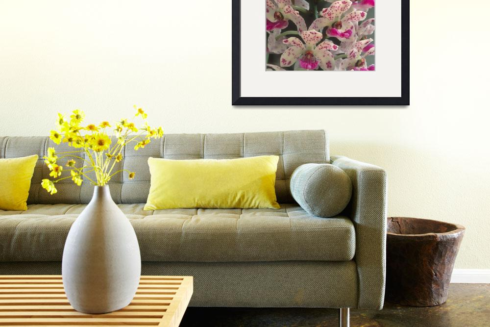 """""""Pink and White Orchid&quot  by TerryCrain"""