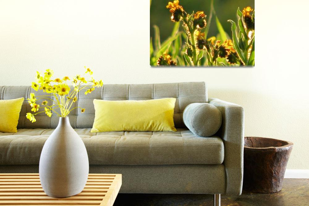 """Tiny yellow meadow flowers_4108""  (2009) by davies"