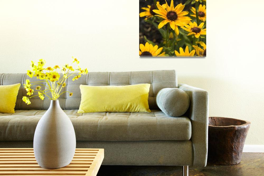 """""""Looking to the Sky - Black-eyed Susan""""  by tricia"""