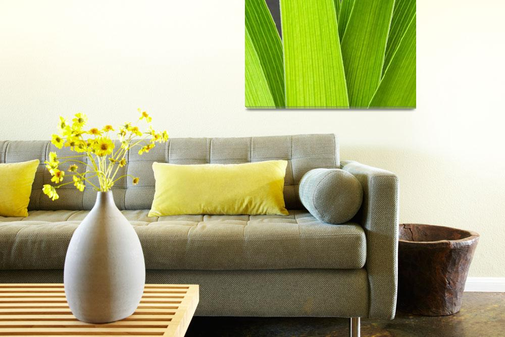 """""""Daylily Leaves""""  (2008) by MichaelSwanson"""