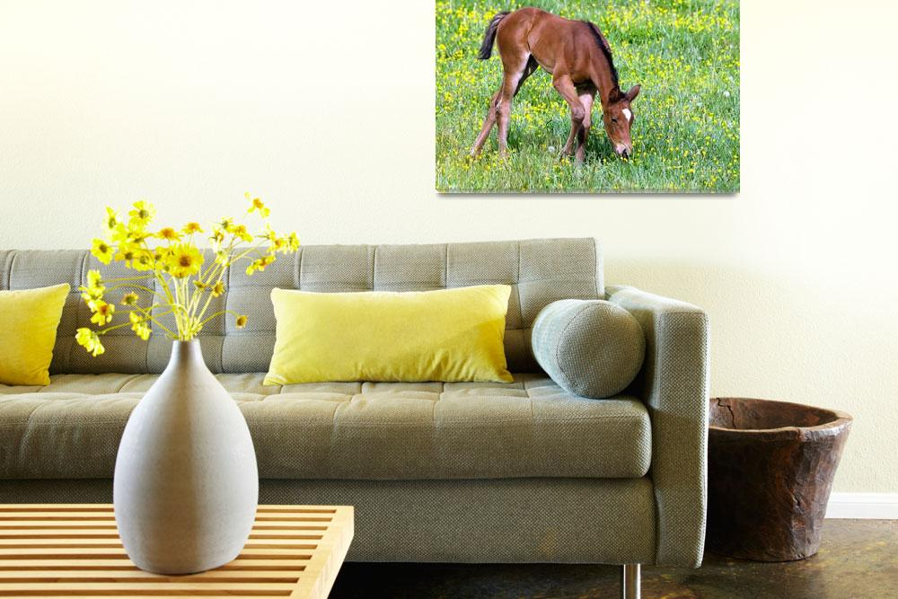 """""""Foal""""  (2012) by WildAboutNaturePhotography"""