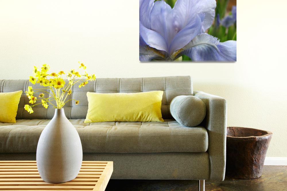 """Blue Iris Flowers Art Prints Light Blue Irises&quot  (2009) by BasleeTroutman"