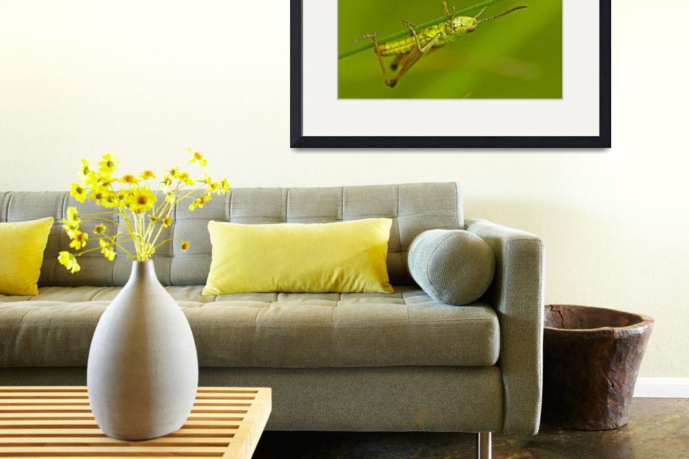 """""""Grasshopper, nature&quot  (2009) by guimo"""