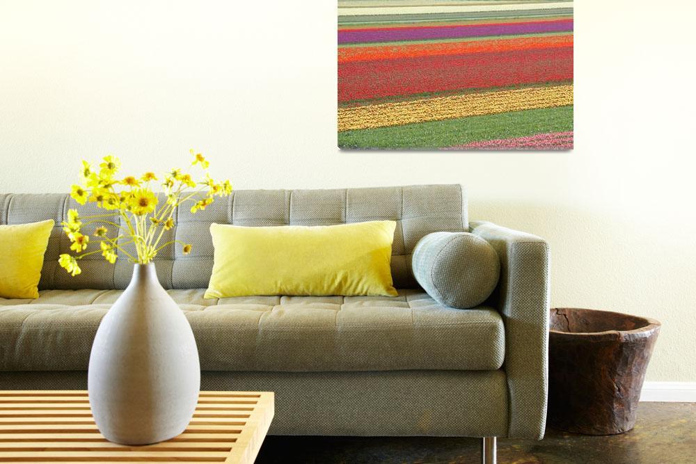 """Fields of Tulips""  by vicki"