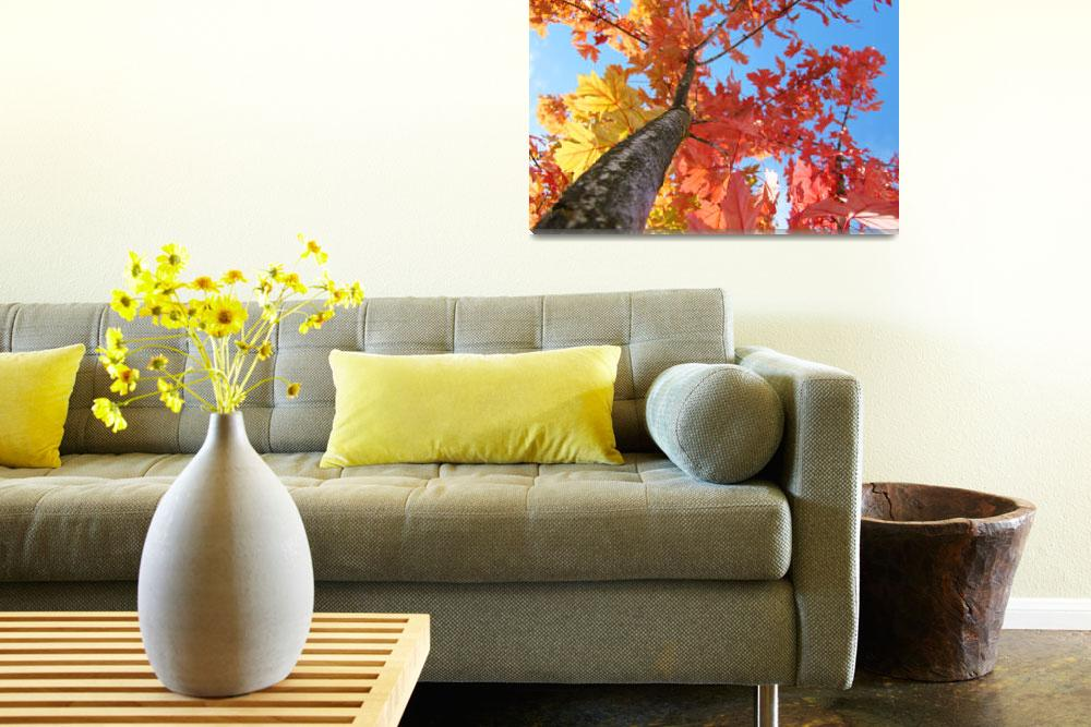 """Fall art Looking Up Tree Blue Sky Orange Leaves&quot  (2010) by BasleeTroutman"