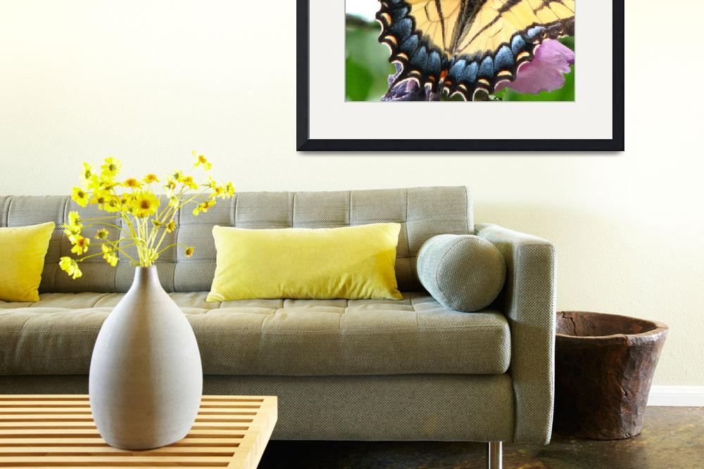 """Eastern Tiger Swallowtail (Papilio glaucus)&quot  (2009) by JTUSO"