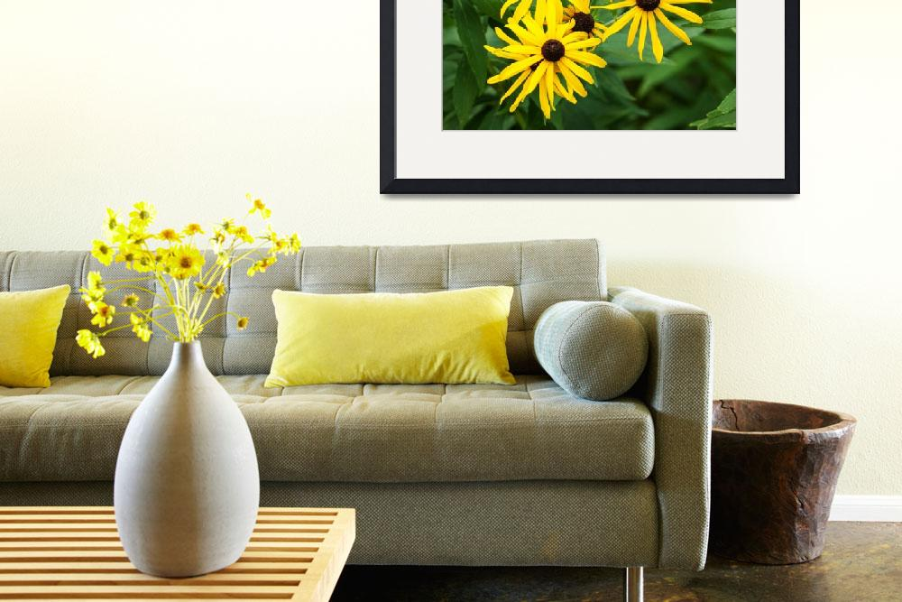 """""""Black Eyed Susan&quot  (2012) by StonePhotos"""