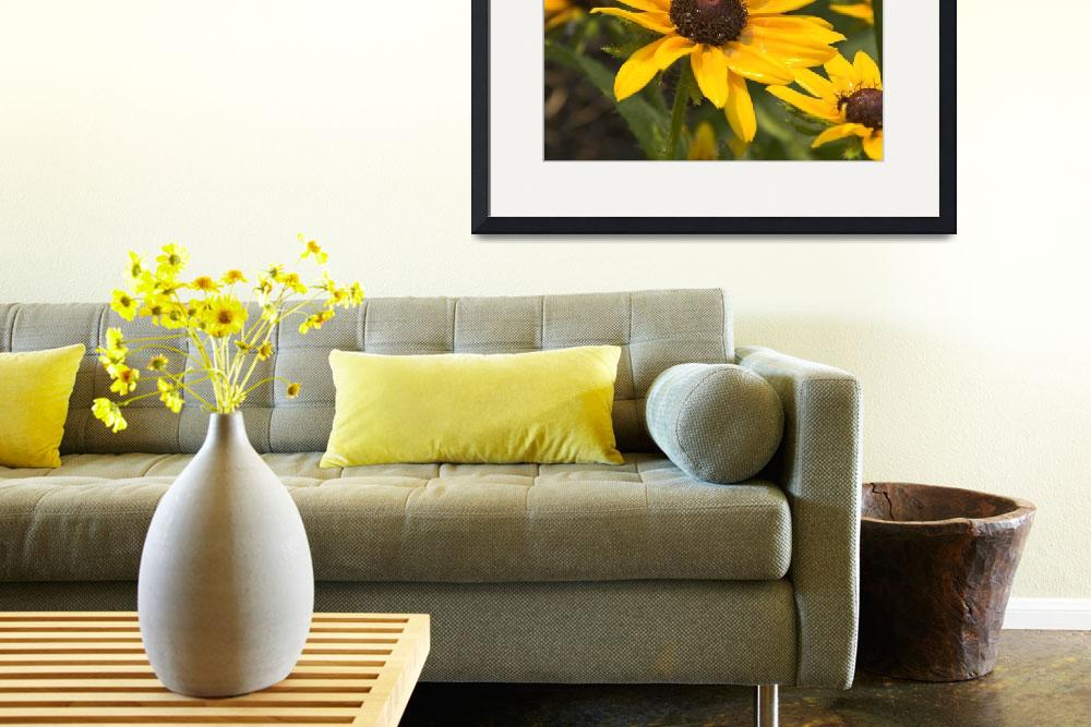 """Black-eyed Susan&quot  (2008) by tricia"