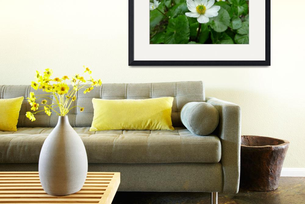 """""""White Marsh Marigolds&quot  (2009) by redvi0let"""
