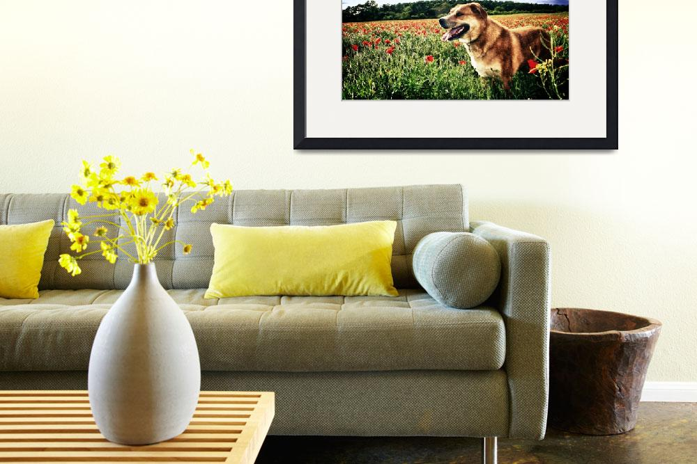 """Poppy Fields Dog""  (2011) by InspiraImage"