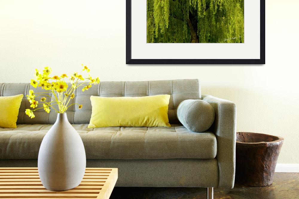 """Enchanting Weeping Willow Tree Landscape Wall Art""  (2011) by PhotographsByCarolFAustin"