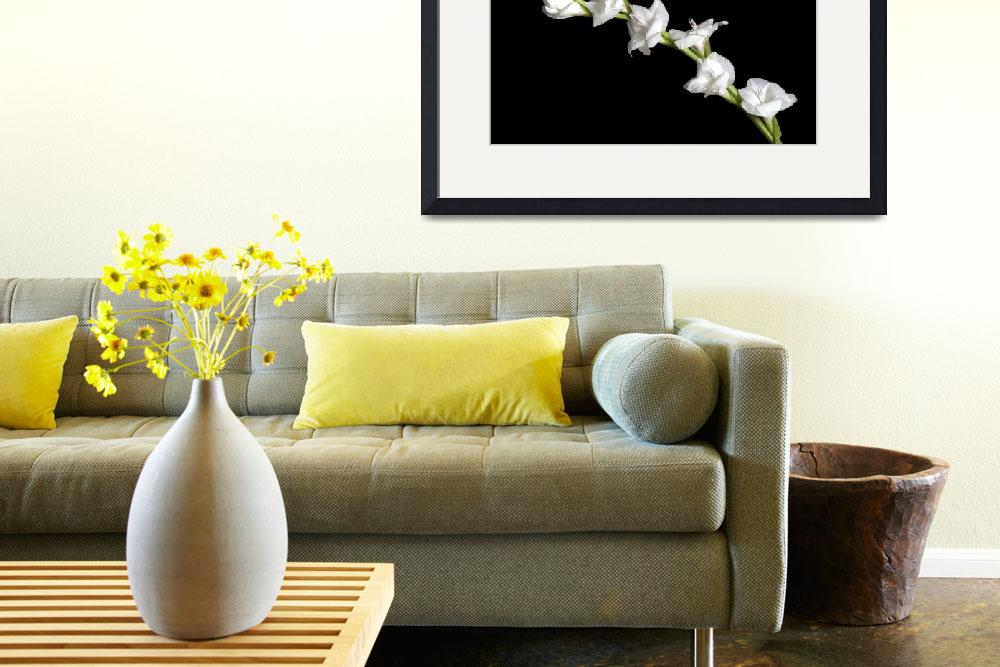 """White Gladiola&quot  (2007) by ToddMortonPhotography"
