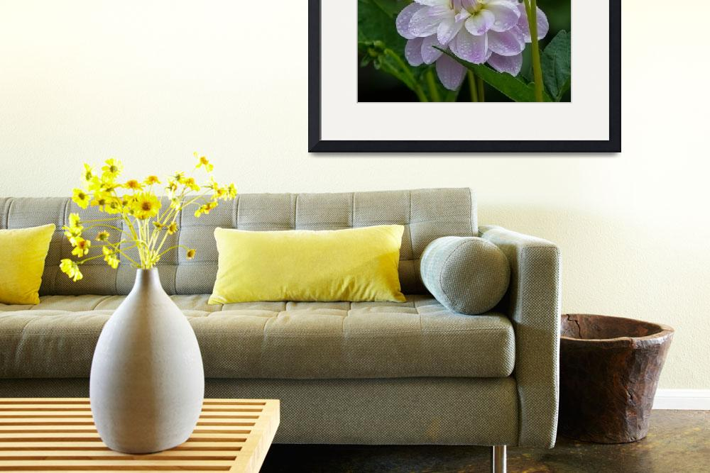 """""""Porcelain Dahlias With Dewdrops&quot  by GlennFrancoSimmons"""