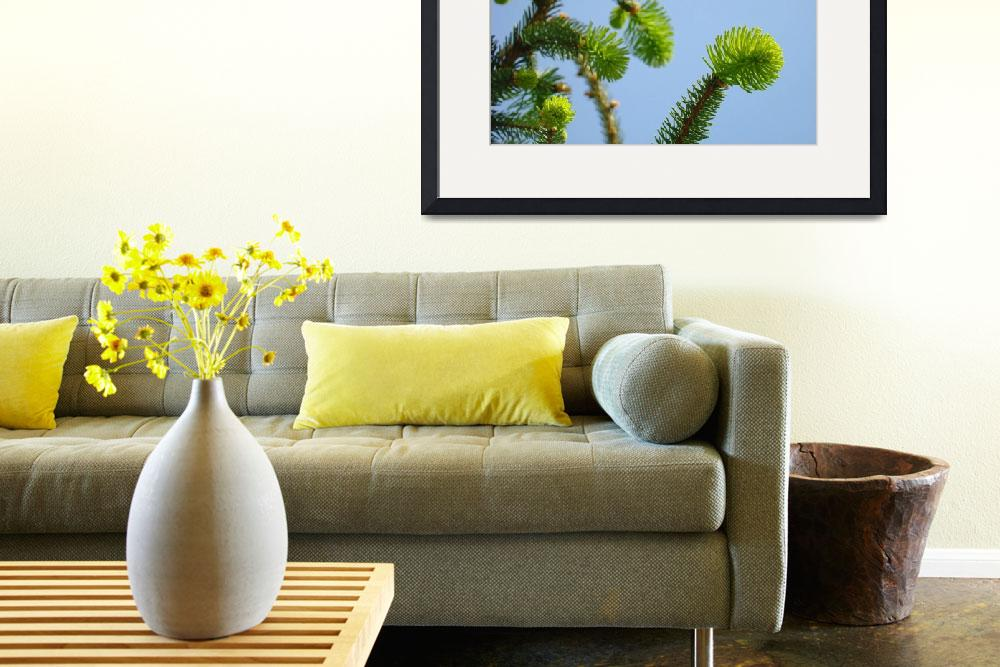 """Conifer Pine Tree Art prints Blue Sky Forest Lands&quot  (2013) by BasleeTroutman"